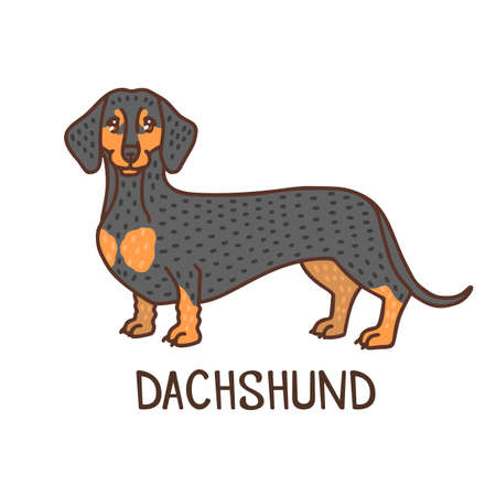 Isolated Dachshund in Hand Drawn Doodle Style Ilustração