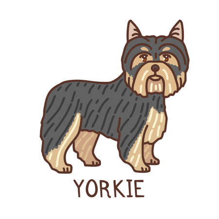 Isolated Yorkshire Terrier in Hand Drawn Doodle Style