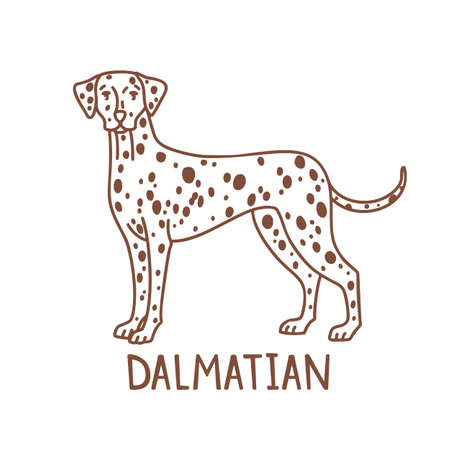 Isolated Dalmatian in Hand Drawn Doodle Style