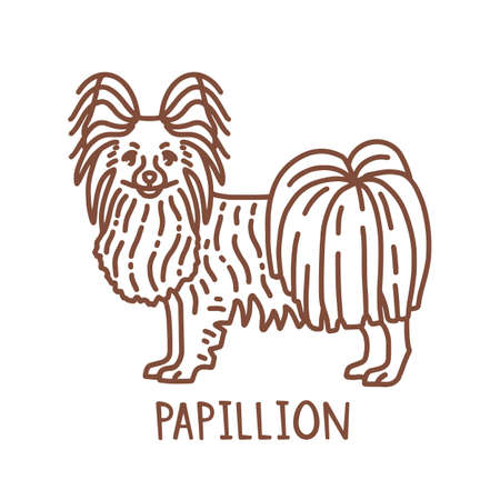 Isolated Papillion in Hand Drawn Doodle Style
