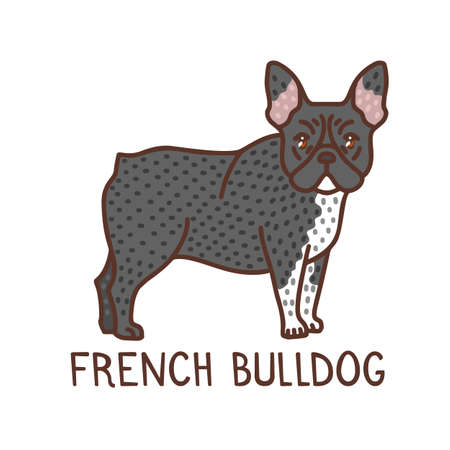 Isolated French Bulldog in Hand Drawn Doodle Style