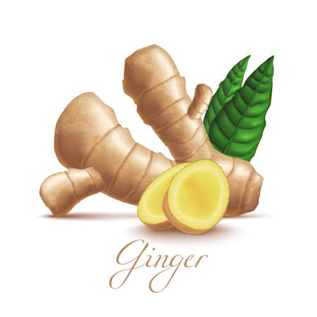 Isolated Ginger Root and Leaves in Realistic Style