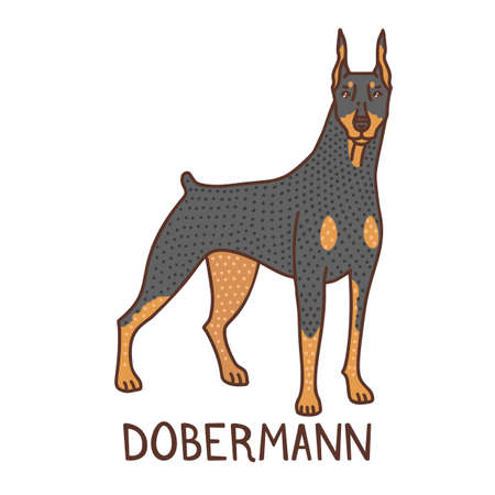 Isolated Dobermann in Hand Drawn Doodle Style