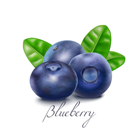 Isolated Bluberry Berries and Leaves in Realistic Style