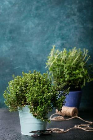 Fresh organic Oregano and Thyme. Rustic organic herbs concept.