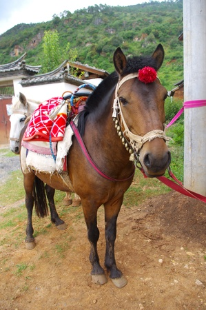 Horse farm Stock Photo - 10782115