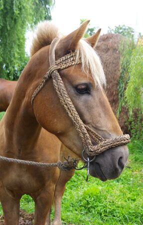 Close-up horse  photo