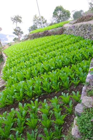 Vegetable plot photo