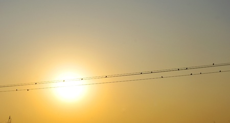 Wire and bird silhouette sunset Stock Photo - 11715367
