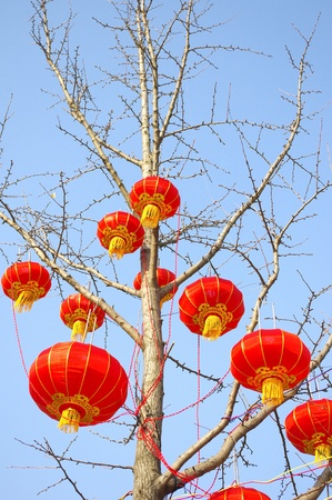 Chinese New Year Lantern photo