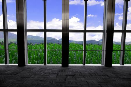 Corn in the window Stock Photo - 13369779