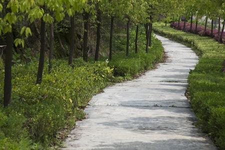 corridors: Tree corridors
