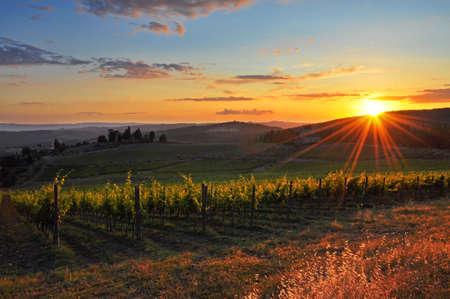 chianti: Tuscan vineyard Stock Photo