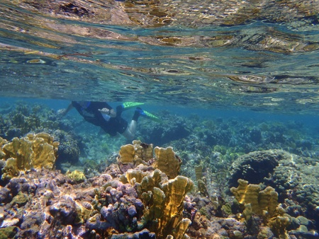Snorkeling at the coral reefs at Turks and Caikos Banco de Imagens