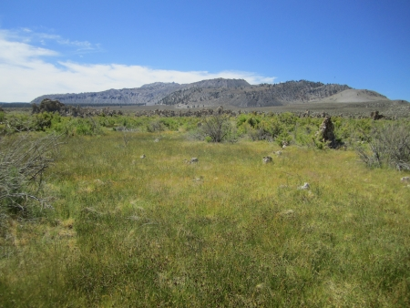 mammoth lakes: green meadow, Mammoth Lakes meadow, field, nature Stock Photo