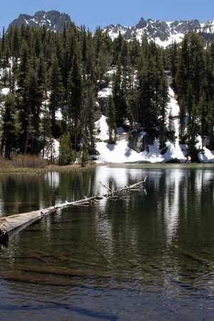 mammoth lakes: Emerald Lake with tree floating, snow capped mountains, Mammoth Lakes, California