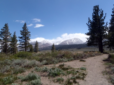 mammoth lakes: Mountain Hiking Trail, Pine Trees, Trail, Mammoth Lakes Trail