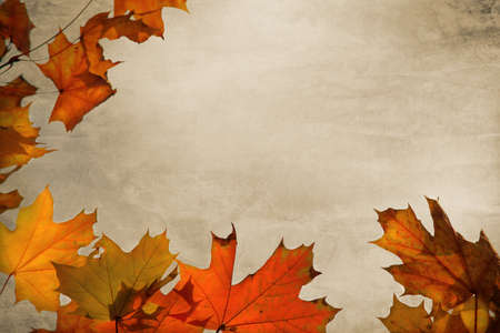 Autumn background with maple leaves - Holiday Background ,Thanksgiving photo