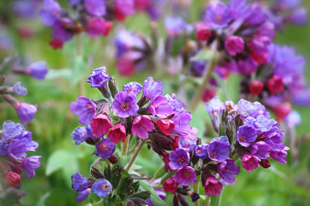 Comfrey flowers flowery detail