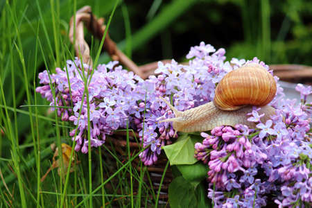 still life in the garden and a wicker basket with flowers and snails