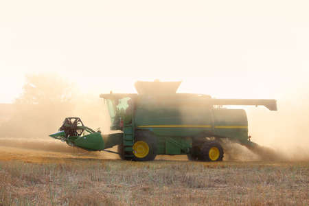 The harvester collects the wheat harvest in the field of dust