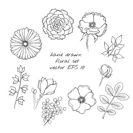 eglantine: Hand drawn ink floral sketch set.  Illustration