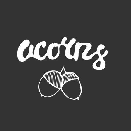 acorns: Chalk lettering Acorns with hand drawn acorns.