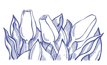 thee: decorative tulip composition in line art, sketchy style . Thee tulip flowers with leaves.