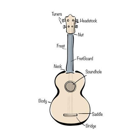 Infographic with hand drawn ukulele. Vector illustration. Illustration
