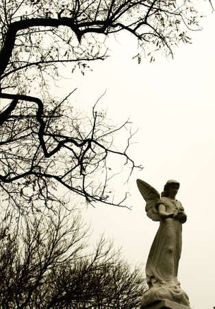 Angel in the cemetery photo