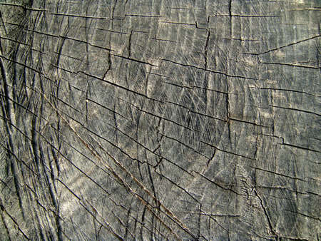 texture of old wood Stock Photo - 13615981