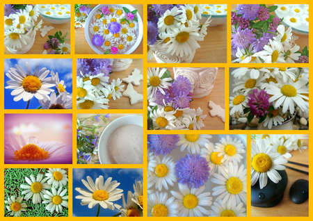daisy collage photo