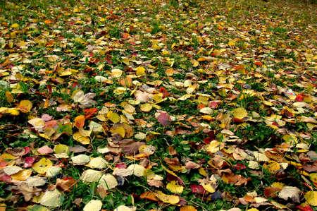 autumn motif: colorful leaves