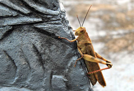 alight: Grasshopper scendere sulla pietra grigia