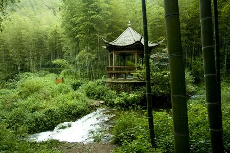 pavilion: chinese pavilion in bamboo grove