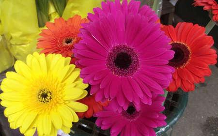 margaritas: Multicolor bouquet of Daisy