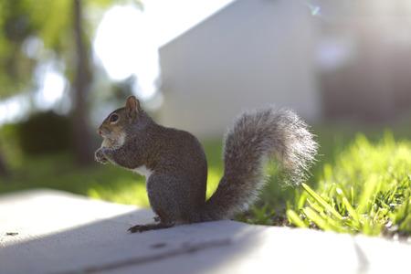 Squirrel eating a peanut Stok Fotoğraf