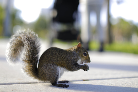 Stock image of a squirrel eating a nut Stok Fotoğraf
