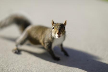 Closeup image of a squirrel Stok Fotoğraf