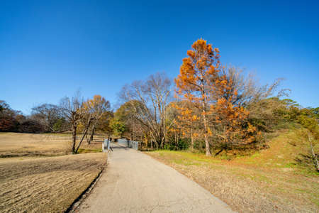 Winter foliage in Piedmont Park Atlanta GA USA Foto de archivo