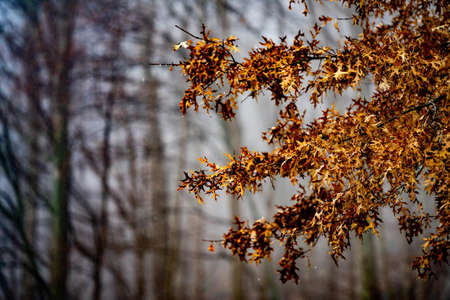 Photo of foliage orange leafs on tree branches in the woods