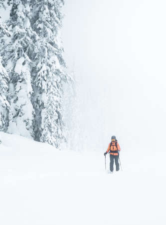 Woman with black backpack and an orange jacket and goes in a snowy forest with skis in foggy weather. Stockfoto