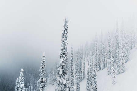 Trees covered with hoarfrost and snow in mountains at foggy weather. Banco de Imagens