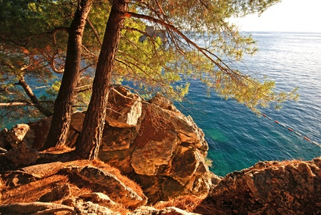 Beautiful summer landscape with turquoise Adriatic Sea and pine tree,Croatia. Afternoon sunlight photo