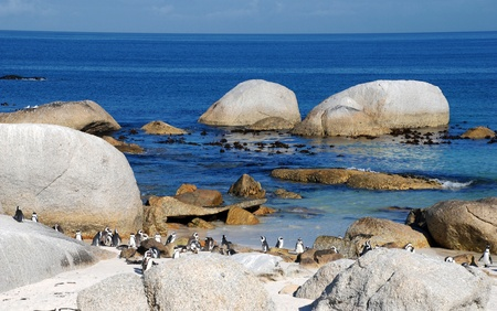 beautyful: Beautyful view of the beach of Atlantic Ocean(South Africa)with african penguins Stock Photo
