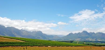 西 Cape(South Africa) 州の山とブドウ園の美しい風景