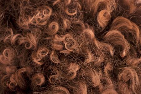 sheepskin: Fondo marr�n de piel de oveja suave y esponjosa, atenci�n selectiva