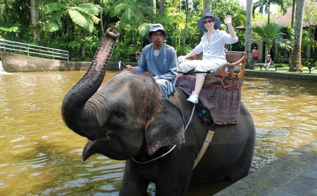 Bali, Indonesia - January 2, 2011: Caucasian woman enjoy a ride with mahout on the back of an Asian elephant during a trek through Elephant Safary Park in Bali. Park meets International Standards for animal care and is set in more than 2 hectares of exoti