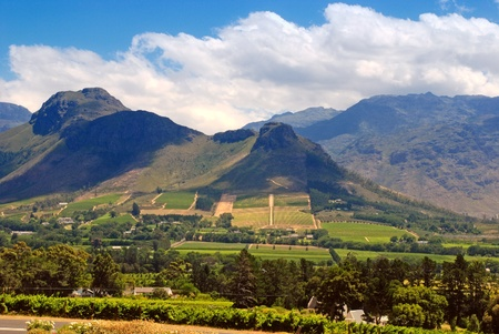 wine industry: Rural landscape with mountains, fields and vineyard, Capetown province (South Africa)