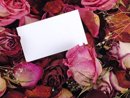 empty card for your message on romantic dried roses background Stock Photo - 12231567